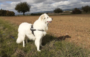 Read more about the article Handicap-Hund – na und?