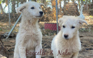 Read more about the article Nala und Boccelli